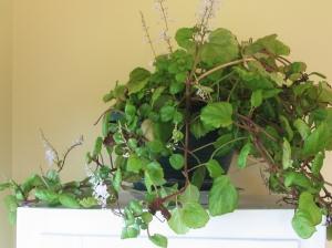 Plants 004