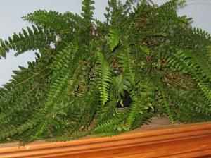 Plants 032
