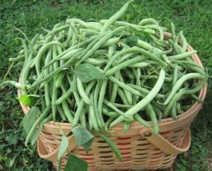 Green Beans 008