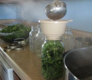 Green Beans 047